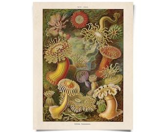 Oceanic Prints