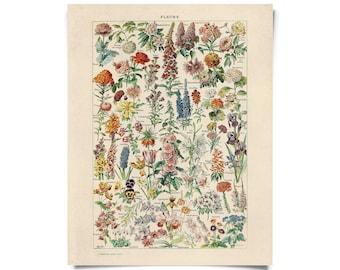 Vintage Botanical Fleurs Garden Flower Print w/ frame option