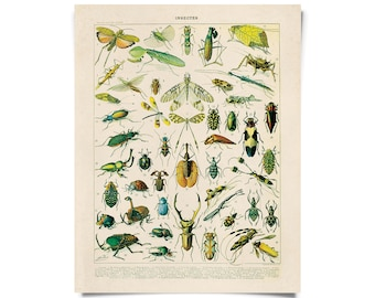 Vintage Nature French Insects 1 Print w/ optional frame