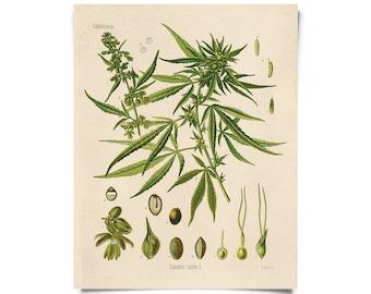 Vintage Botanical Cannabis Marijuana Print w/ optional frame