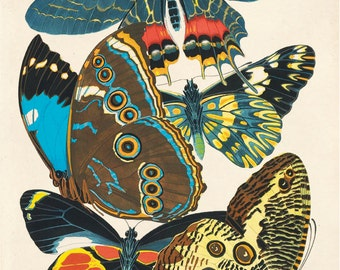 Vintage Butterfly Illustration Print Reproduction. French Seguy Plate 2 Variety of Butterflies Chart Diagram Poster. Entomology CP271
