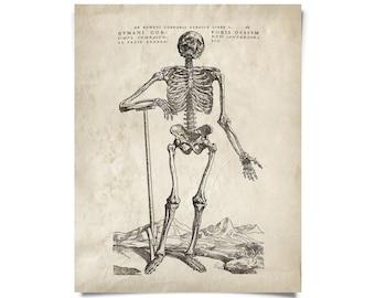 Vintage Anatomy Skeleton Standing Print w/ optional frame
