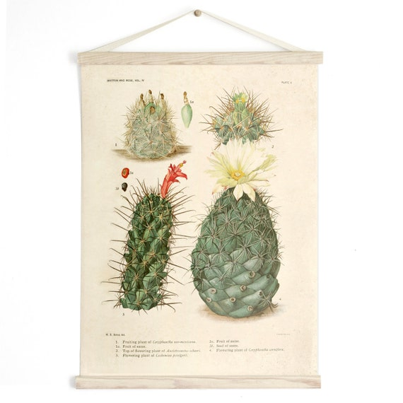 Diagram Pull Flowers Palm Print Cactus C009cv Vintage Plate Springs IiEducational Botanical Poster Desert Chart Down Rj3qL5A4