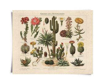 Vintage Botanical Cactus Kakteen Chart 1 Print
