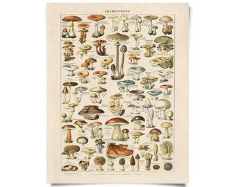 Vintage Botanical French Mushroom Print w/ optional frame