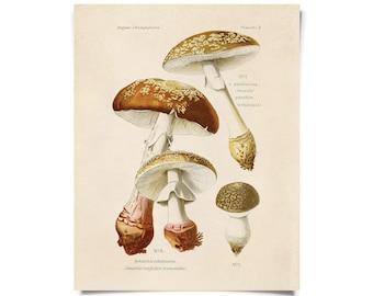 Vintage Botanical Mushroom Blusher Print w/ optional frame