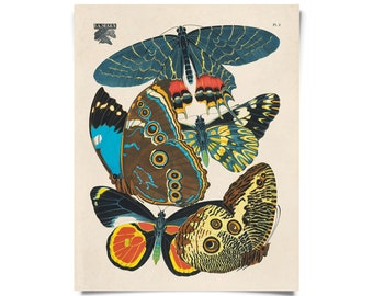 Vintage Nature Butterfly Seguy 2 Print w/ optional frame