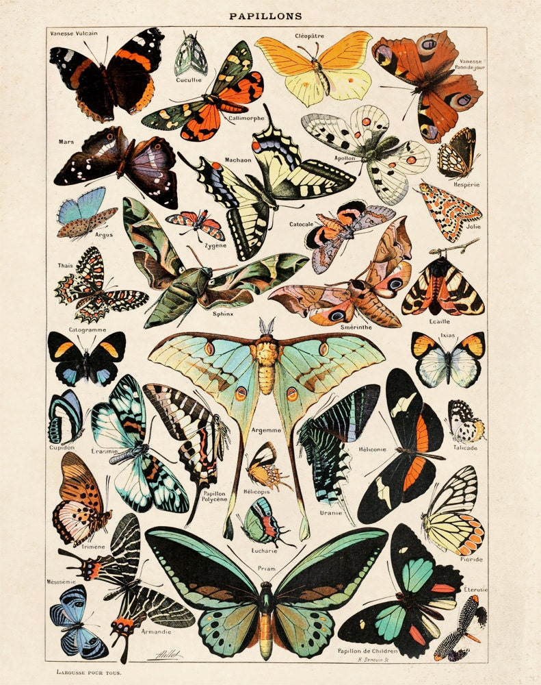 Butterfly Diagram 3 Papillons Poster Vintage Reproduction
