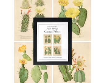 Vintage Palm Springs Cactus Print Set. Botanical Cacti blossom Set of 4. Chart Diagram Cactus Desert Poster Pull Down Chart - SET001