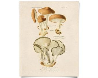 Vintage Botanical Mushroom Oyster Print w/ optional frame