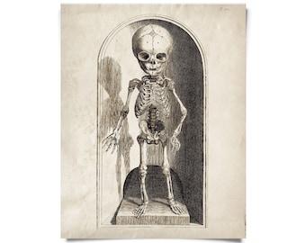Vintage Anatomy Small Skeleton Print w/ optional frame
