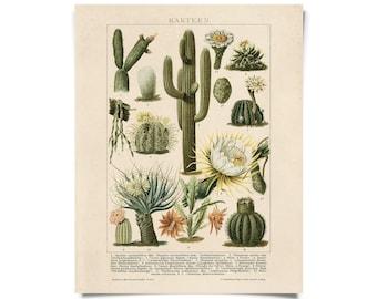 Vintage Botanical Cactus Kakteen 2 Print w/ optional frame