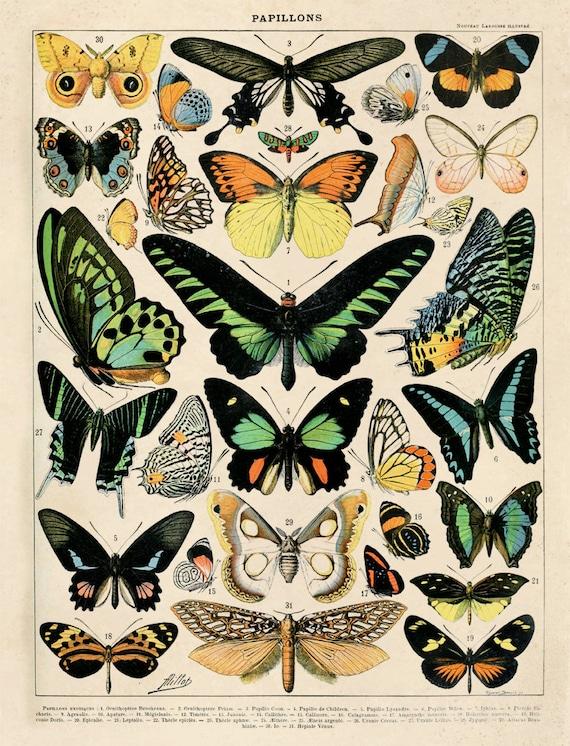 Diagramm-Grafik Vintage Schmetterling Kunst Reproduktion