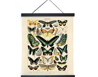 Vintage Nature French Butterfly 1 Print w/ optional frame