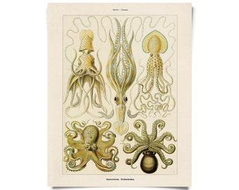 Vintage Haeckel Octopus Squid Print w/ optional frame