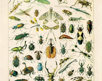Insects Diagram Vintage Reproduction Print. Variety of Insects Educational Chart by Adolphe Millot Science Entomology Bugs. CP255