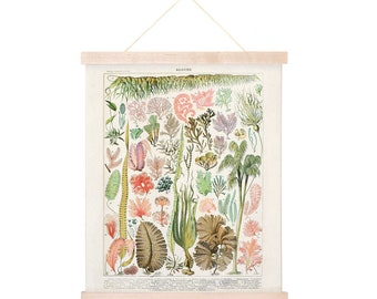 Vintage Botanical Seaweed Algae Print w/ optional frame