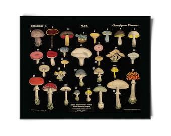 Vintage Botanical Mushroom Black Print 1