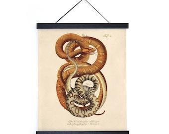 Vintage French Snake Zoology Print w/ optional frame