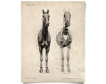Vintage Horse Skeleton Print. Science Animal Anatomy Study Biology Educational Diagram Chart - A019P