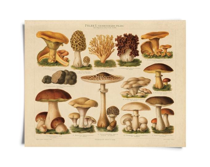 Featured listing image: Vintage Botanical Mushroom German Pilze 1 Print