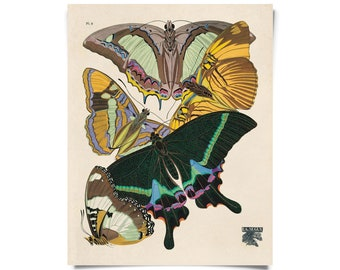 Vintage Nature Butterfly Seguy 8 Print w/ optional frame
