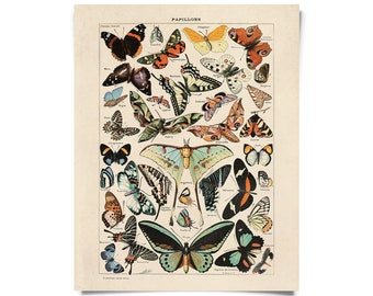 Vintage Nature French Butterfly 3 Print w/ optional frame