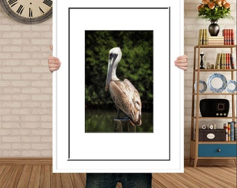 Pelican Photography-Vertical Print-Bird Photography-Coastal Art-Fine Art Print-30x40-Large Coastal Photo-Florida-Nature Photography