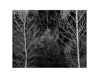 Fine Art Black & White Landscape Photography of Bare Trees Along Highway 21 in Missouri