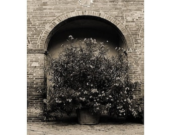 "Fine Art Sepia Photography of Tuscany - ""Oleander In a Tuscan Courtyard in Sepia"""