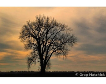 Fine Art Color Landscape Photography of Morning Sky and the Silhouette Lone Tree in a Field at Columbia Bottom