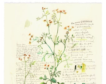 Botanical print, Watercolor cilantro poster, Herb print, Kitchen art, Watercolor plant, Botanical art, Herb painting, Green kitchen decor