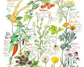 Botanical chart, Plant illustration, Medicinal plant print, Herb chart art print, Healing herb poster, Watercolor painting, Healthy artwork