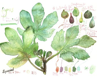 Fig tree watercolor print, Fig illustration, Fig poster, Kitchen wall art, Green kitchen decor, Botanical painting, Summer fruit print