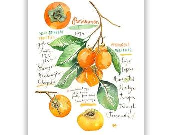 Persimmon poster, Kitchen wall art, Food illustration, Fruit Watercolor painting, Botanical print, Orange kitchen decor, Persimmon tree art