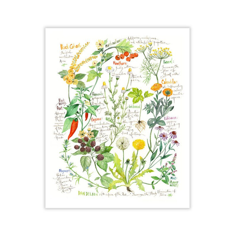 watercolor free healing flowers and plants without draft chinese edition
