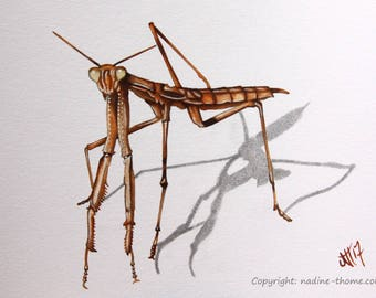 Mantis painting, original watercolor art, insects, bugs, beetles, natural science, nature, garden, fields and forests,