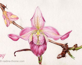 Ladyslipper, original watercolor & pencil painting, botanical art, orchid, botany, garden, nature, moth, butterfly, wild flowers, boho, pink