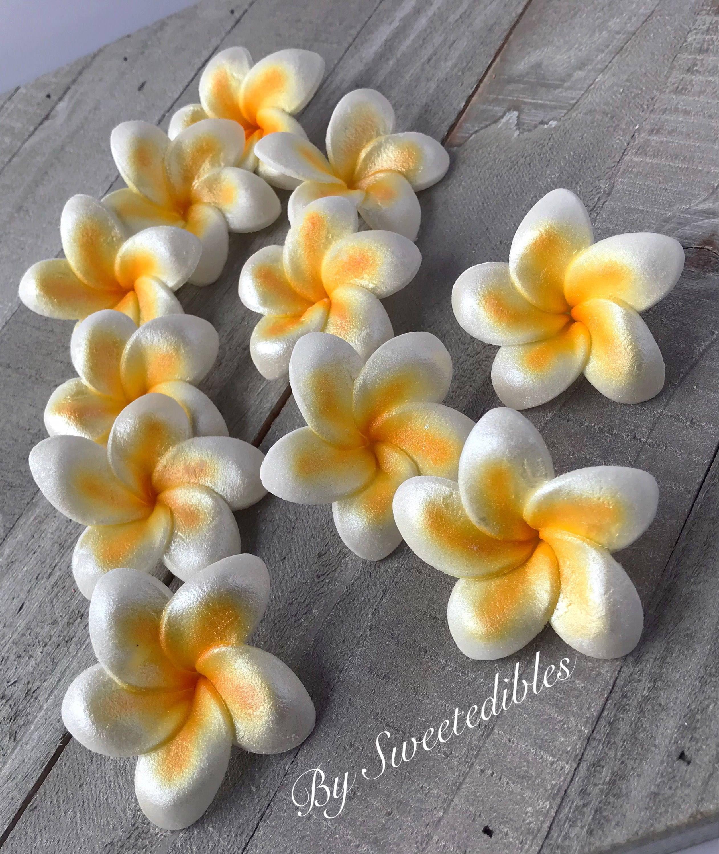 Gum Paste Hawaiian Plumeria White And Yellow 6 Flowers Gumpaste