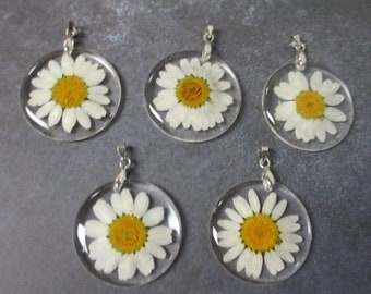 lot of 5 Daisy DRIED FLOWER PENDANTS -  White Daisies Wildflower Resin Round Flat Silvertone