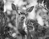 FAWN PHOTO, Baby Animal B...