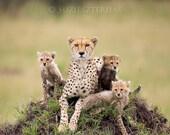 Animal Nursery print, Bab...