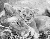Cute Baby Animals, LION M...
