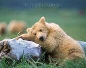 Sleepy Bear Photo Print ,...