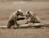 BABY BEARS Playing Sepia ...