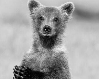 Baby Animal Photography MOM And BABY BEAR Photo Print Safari