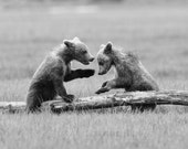 BABY BEARS Playing Photo,...