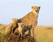 Cute Baby Animals, Cheeta...