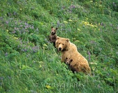 Baby Bear and Mom Photo, ...
