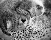 Baby Animal Nursery Art P...